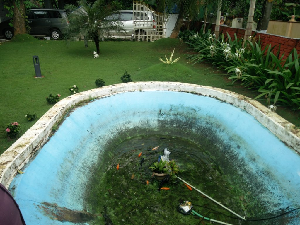 Koi fish pond renovation nedumbassery kochi for Koi pond builders near me
