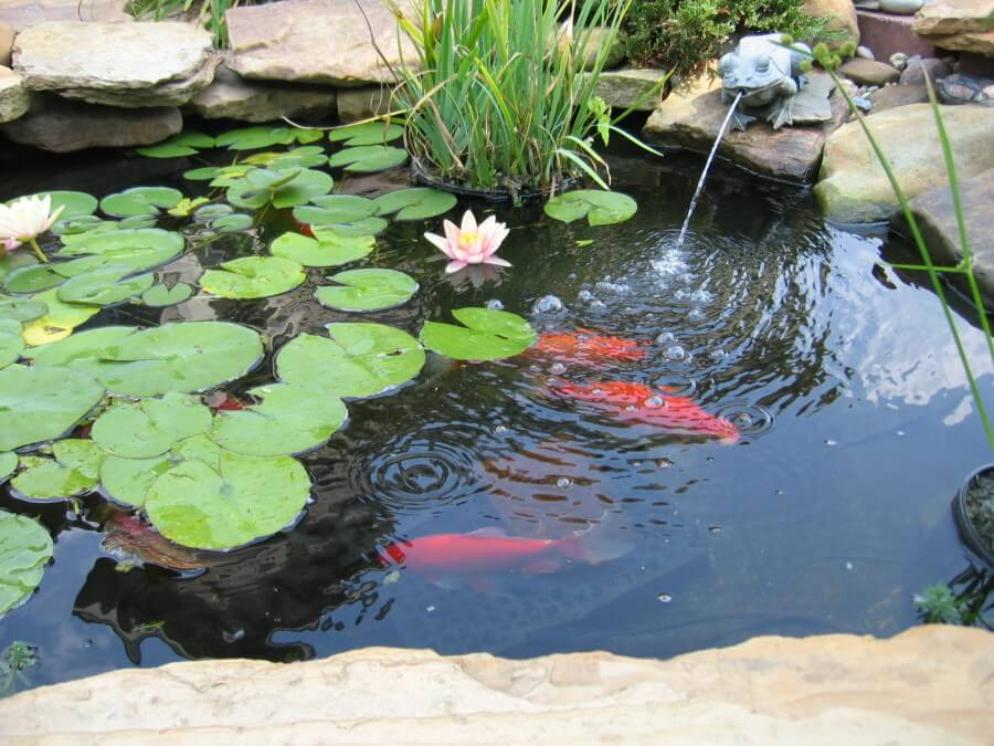 Fish Pond With Fountain