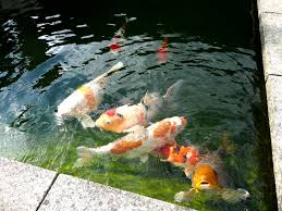 Koi Pond Filtration System