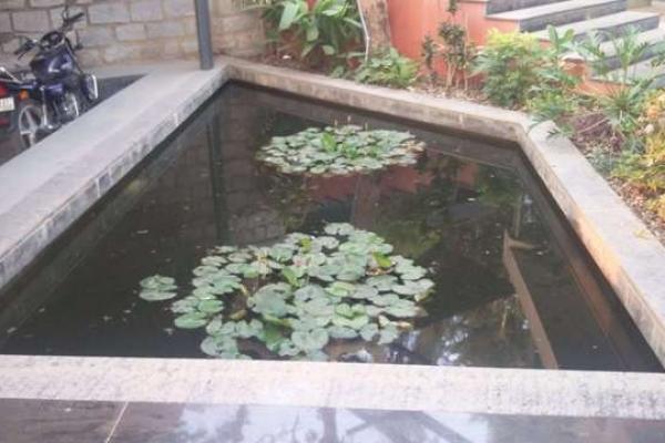 koi-pond-10B071A6F3-D611-6AA8-735B-97DDB6A0158A.jpg